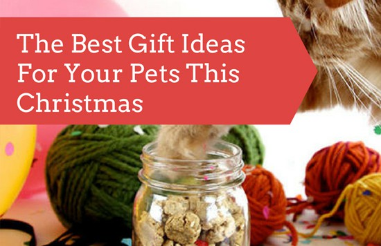 The Best Gift Ideas For Your Pets