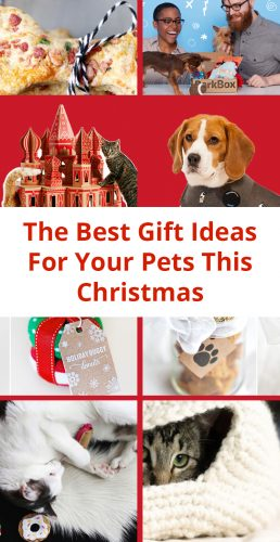 The Best Gift Ideas For Your Pets This Christmas